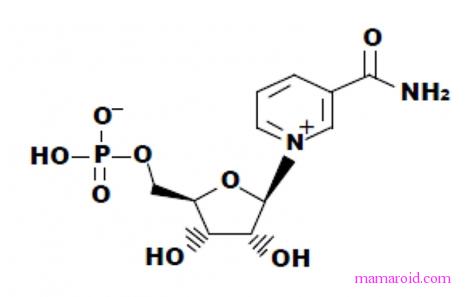 これは朗報!老化防止、いや、若返りの薬「NMN」がいよいよ実用化へ?臨床開始