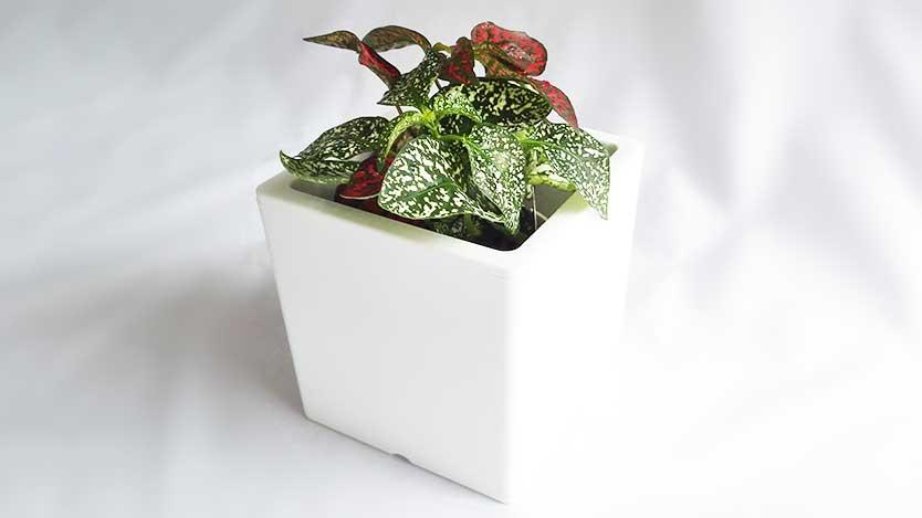 100均ダイソーで四角い植木鉢+観葉植物200円でオシャレなグリーンインテリア完成